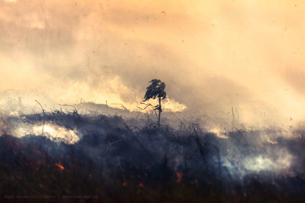 Gallery-Bush-fire-03