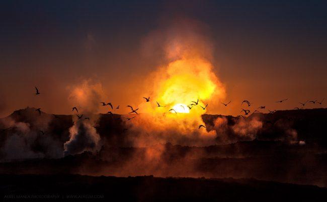 Gallery-Iceland-birds-in-Blue-Lagoon-01