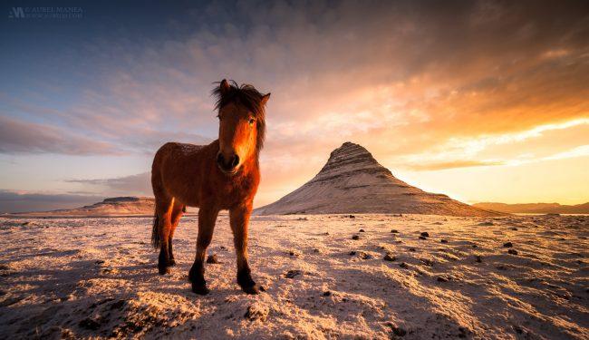 Gallery-Icelandic-horse-in-Grundarfjordur-01-1