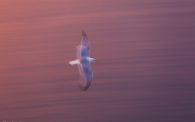 Gallery-Long-Exposure-Birds-03