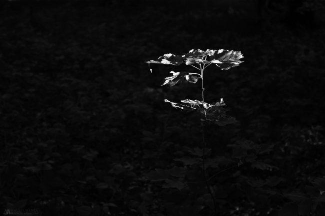 Gallery-Minimalism-27