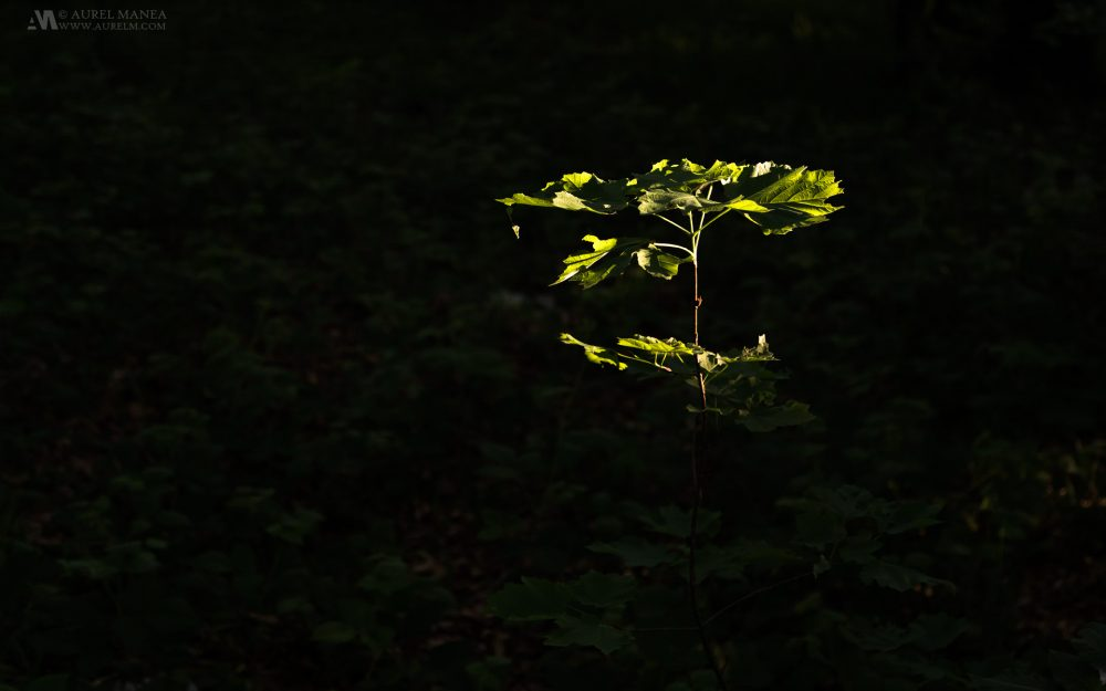 Gallery-Plitvice-a-plant-in-light