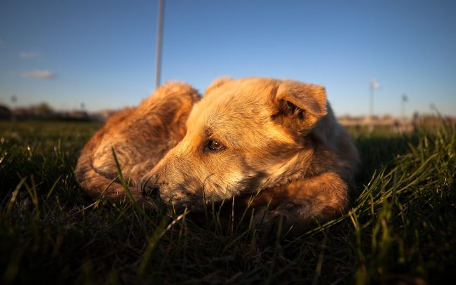 Gallery-Sad-dog-in-sunset-01