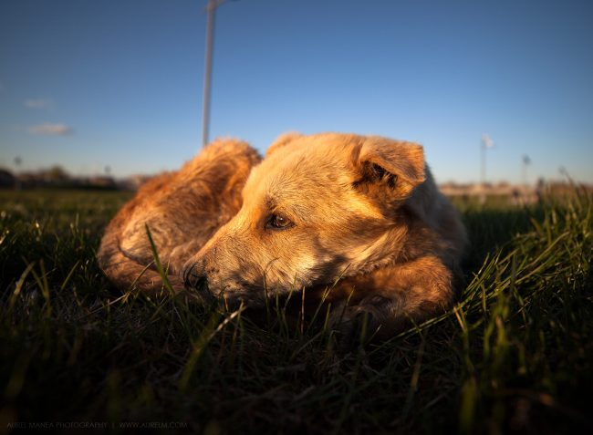 Gallery-Sad-dog-in-sunset-01