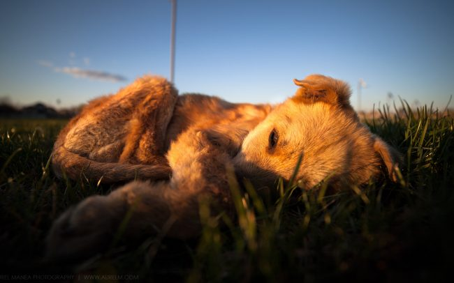 Gallery-Sad-dog-in-sunset-03