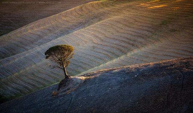 Gallery-Tuscany-lonely-tree-01