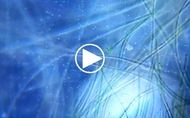 VIDEOTHUMBNAIL-UniverseWithin