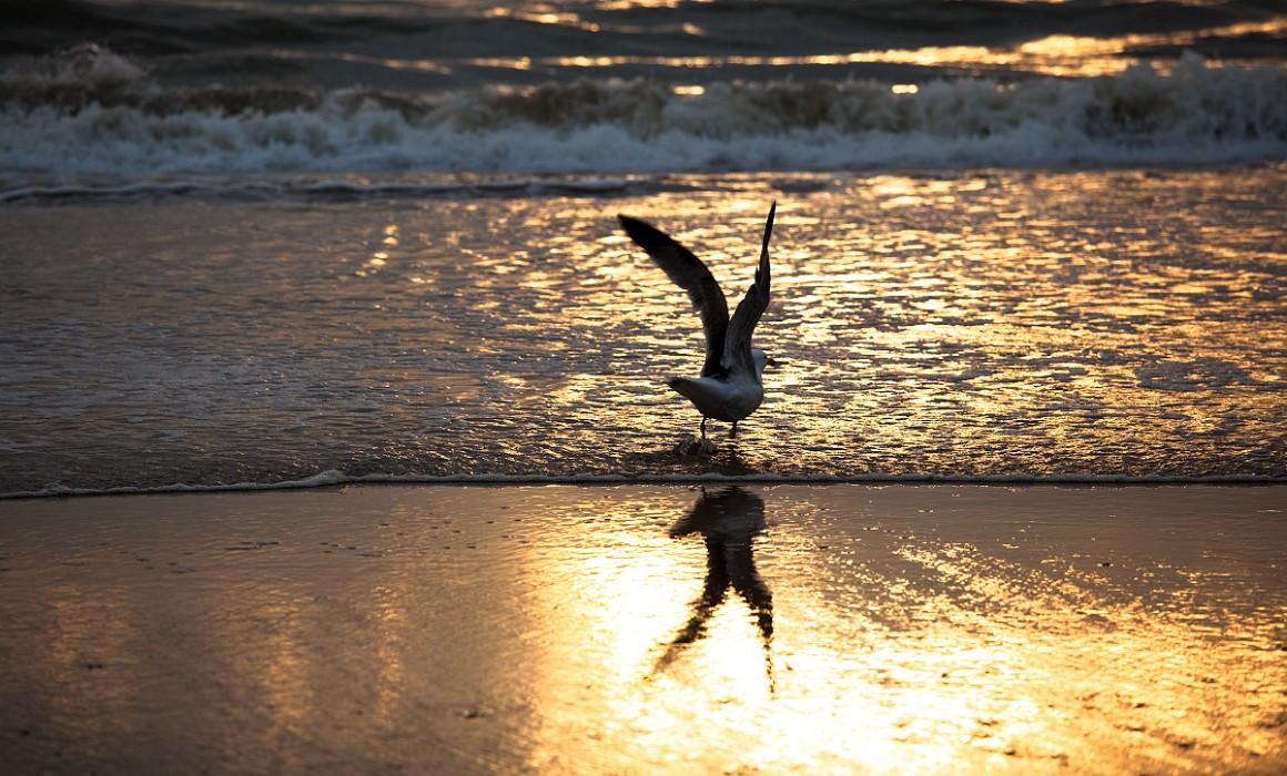 Zandvoort sunset bird