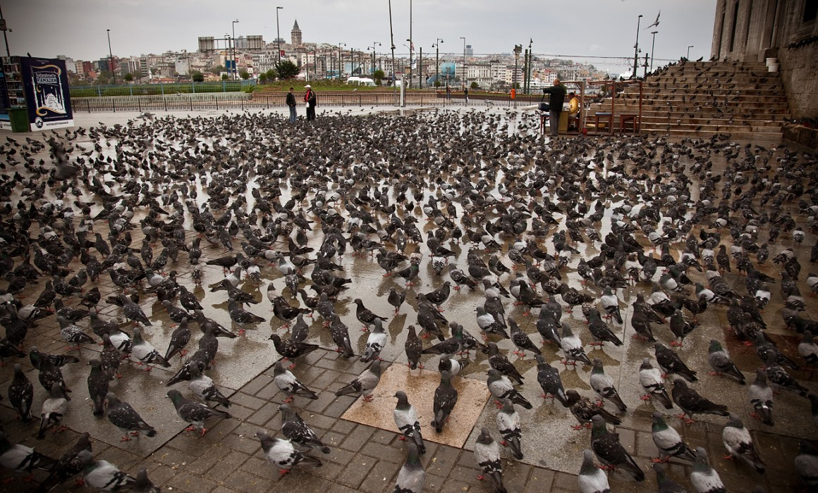 a-lot-of-pigeons-in-Istanbul-02