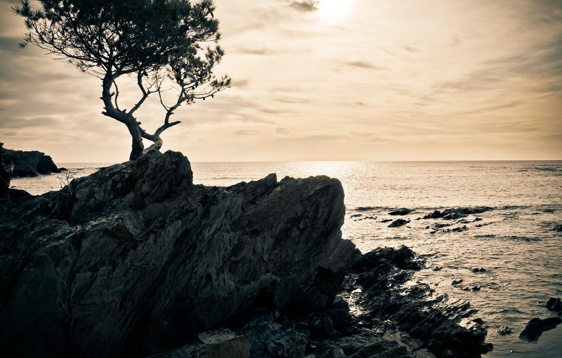tree on ocean rocks